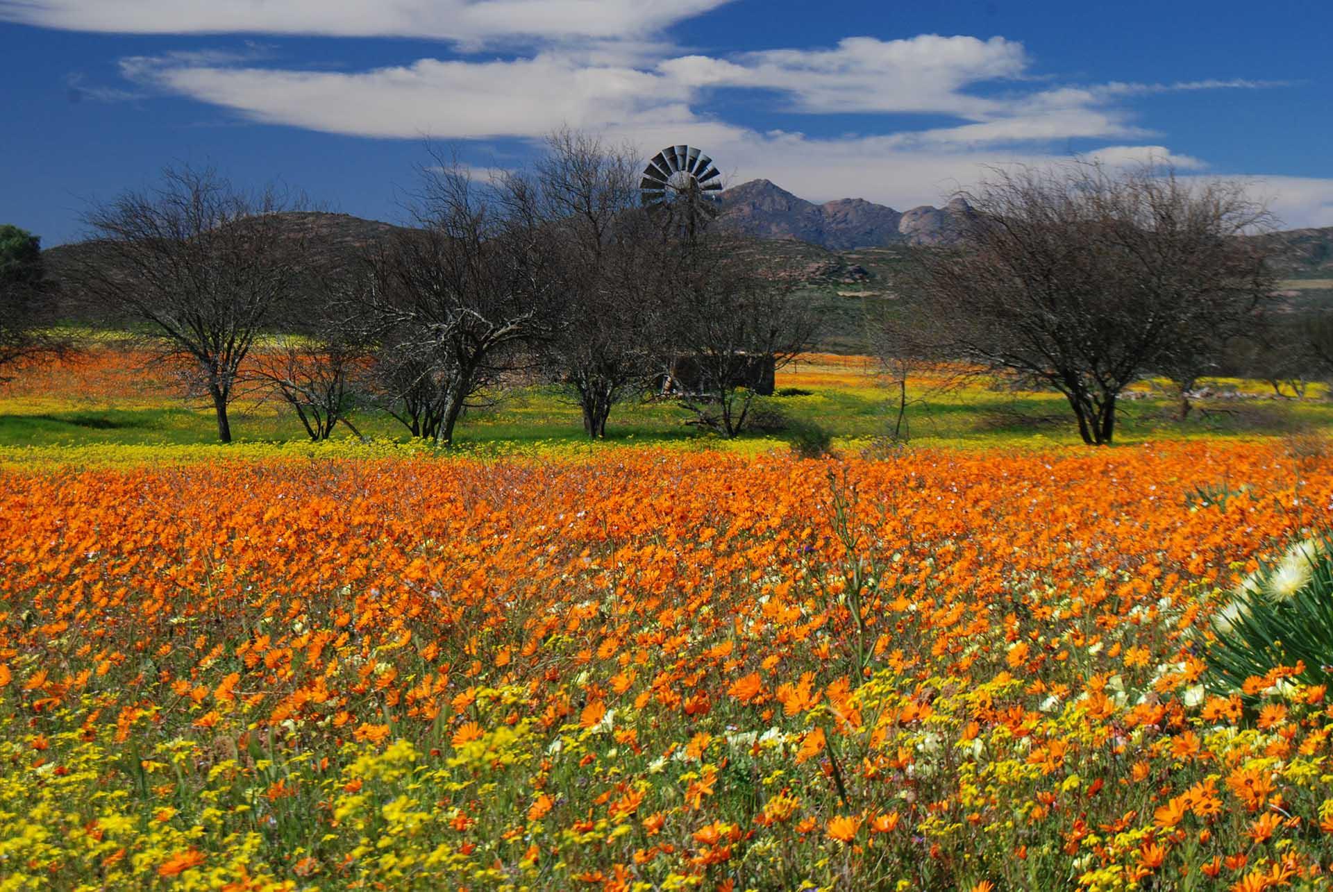 Flowersamaqualand