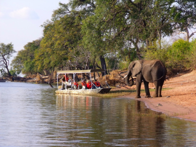 Chobe Elephant - Caprivi
