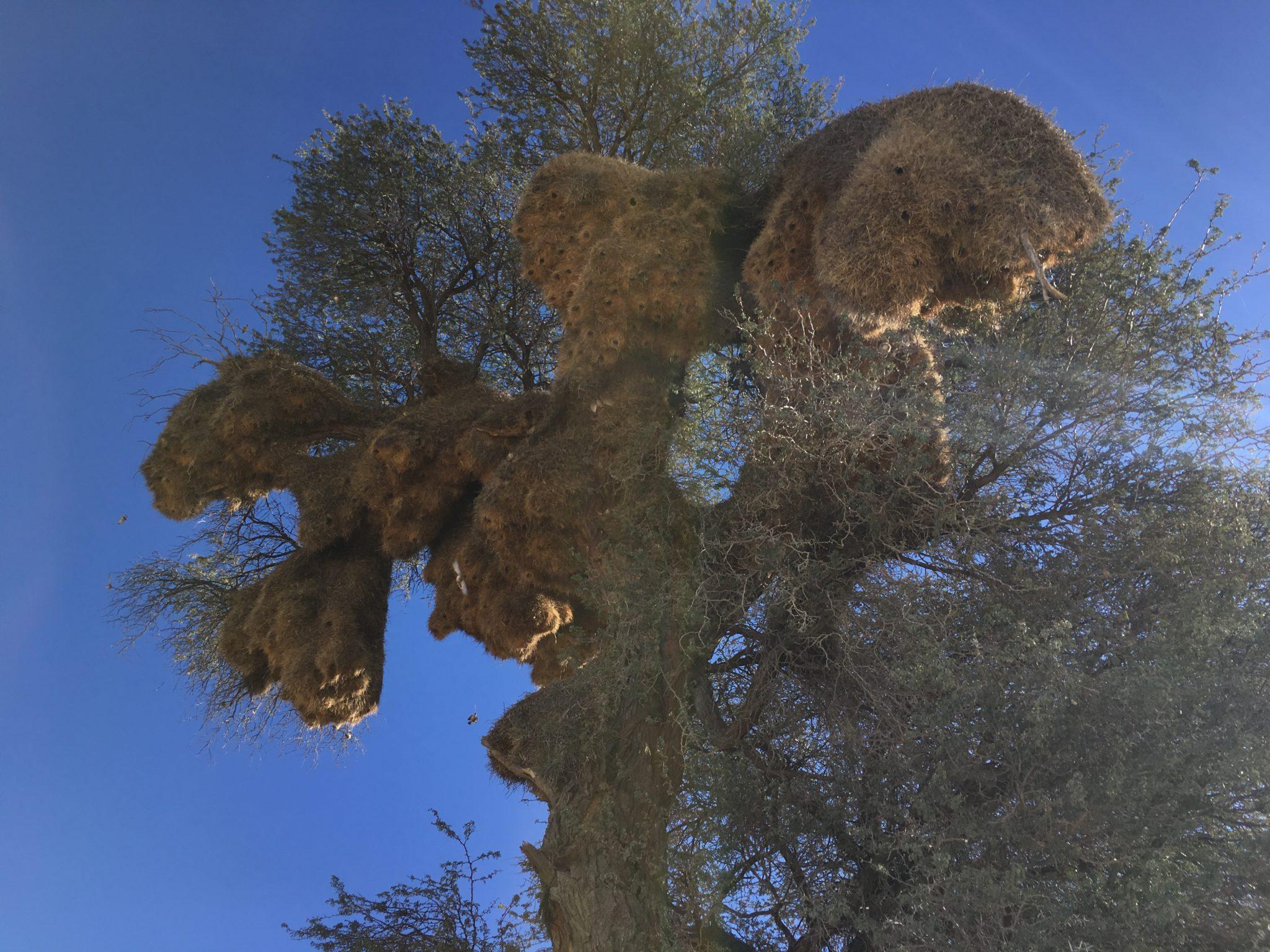 Social Weavers Nest