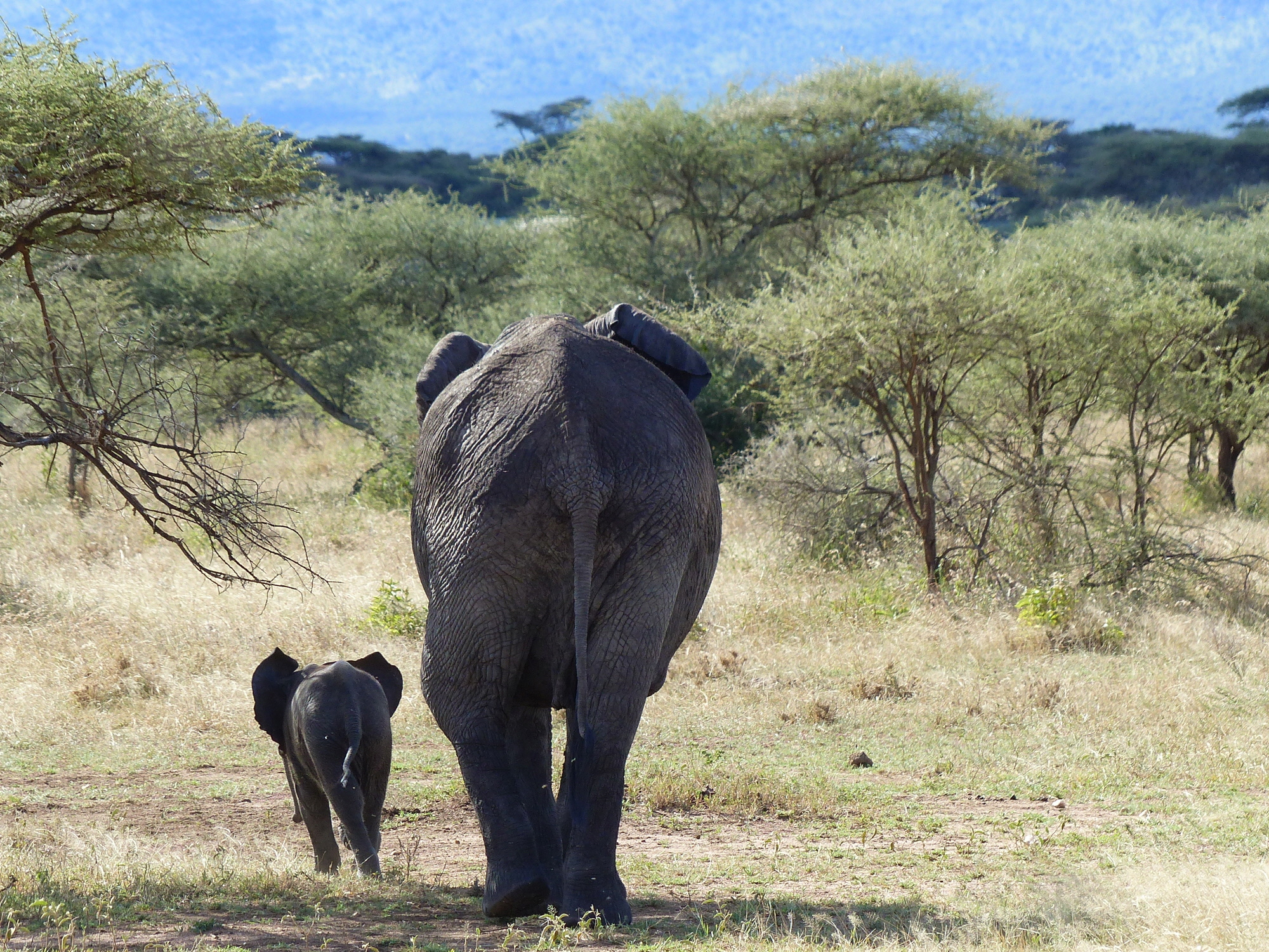 Mom and baby - Serengeti